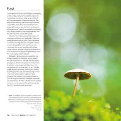 mastering-macro-fungi.jpg