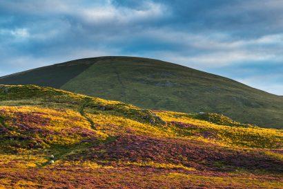 heathery-hedgehope.jpg