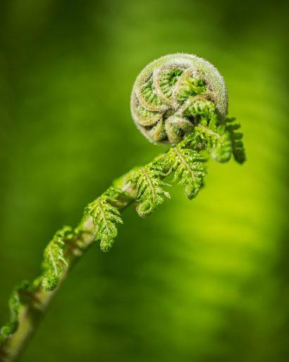 fern-frond.jpg