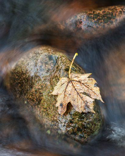 harthope-leaf.jpg