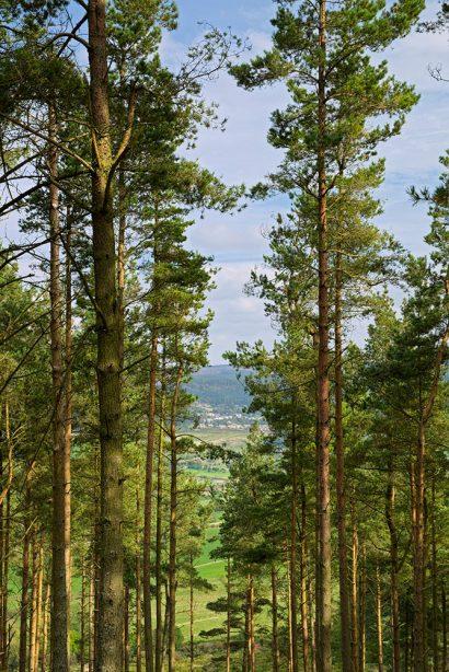 simonside-forest.jpg